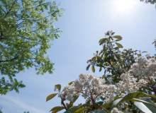 春天阳光下的背景PS图片素材免费下载!无限商用