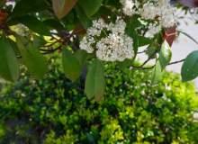 春叶、绿叶、春天鸟语花香背景PS图片素材(免费可商用)6240*4160超大分辨率