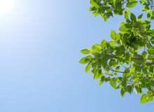 蓝天树叶背景PS素材图片(JPG格式,免费商用)6240X4160 像素