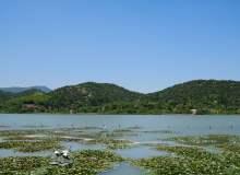 夏日湖畔背景、水面荷叶弥漫照片素材下载(可免费商用,超大分辨率免费照片下载)