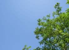 枫杨树与天空背景照片(可免费商用,超大分辨率免费照片下载)