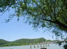 无版权照片下载!大树下的湖边、春天湖边照片图片下载(JPG图片格式)