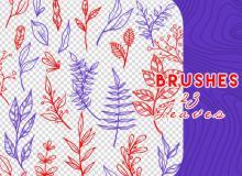 手绘漂亮的植物叶子、野草图案PS笔刷素材