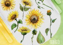 手绘太阳花、向日葵图形PS笔刷素材(PNG格式)
