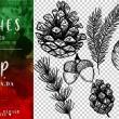 12种手绘植物、针松叶、松果、坚果图形PS笔刷素材