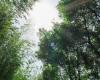 阳光下的树林风景照片下载 – 免费正版图片