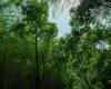 森林 – 免费正版图片