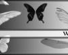 天使翅膀、蝴蝶翅膀、昆虫翅膀PS笔刷