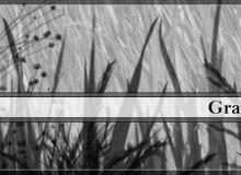 青草、草丛图案PS笔刷