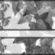 藤蔓植物、爬山虎PS笔刷