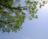 蓝天下的树荫背景  –  超4K照片免费下载