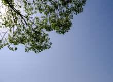 高品质树荫和天空高清照片下载  –  免费正版授权