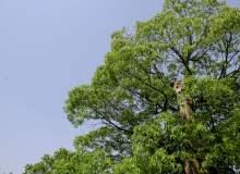 大树、蓝天高清图片 – 免费免费照片