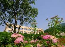春天绿意背景图片  –  免费商用