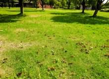 春天的草坪、草地背景 – 免费商用图片