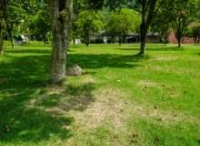 春天的草地图片 -免费商用