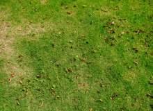 高清草坪图片 -免费商用
