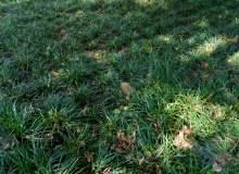 沿阶草、草坪背景图片 –  免费商用照片下载
