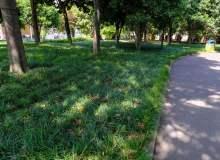 沿阶草、草地高级背景  –  免费可以商用