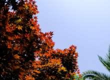 红色枫叶照片 – 免费商用图库
