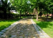 树林小道、公园小道 – 免费商用图片