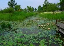 春天莲花湖面背景照片