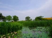春天的湿地湖面照片下载