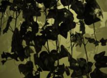 15种高清藤蔓、植物藤蔓缠绕PS笔刷