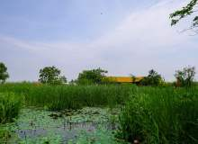 春天的芦苇湖边背景照片免费商用下载