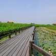 蓝天下湿地湖畔木板走廊照片