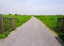 碧绿草地小路、石子路背景图片