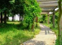 公园走廊背景图片