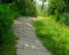 林间小路、山林小路图片背景
