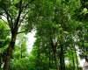山林树木背景图片
