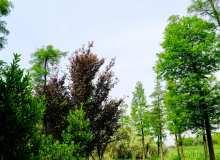 森林树木背景超4K图片分辨率