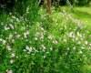 超4K野花背景图片