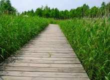 木板芦苇地走廊背景图片