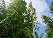 阳光、竹林背景图片  – 免费商用图库