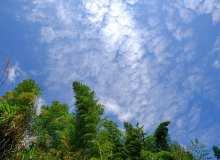 蓝天、树林背景仰望图片