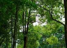 高清4K森林、树林背景图片