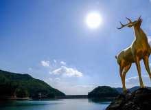 铜鹿背景高清4K照片